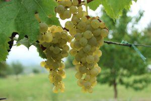 Wein by Johanna_99 auf Pixabay
